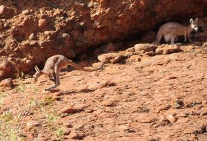 Uluru2