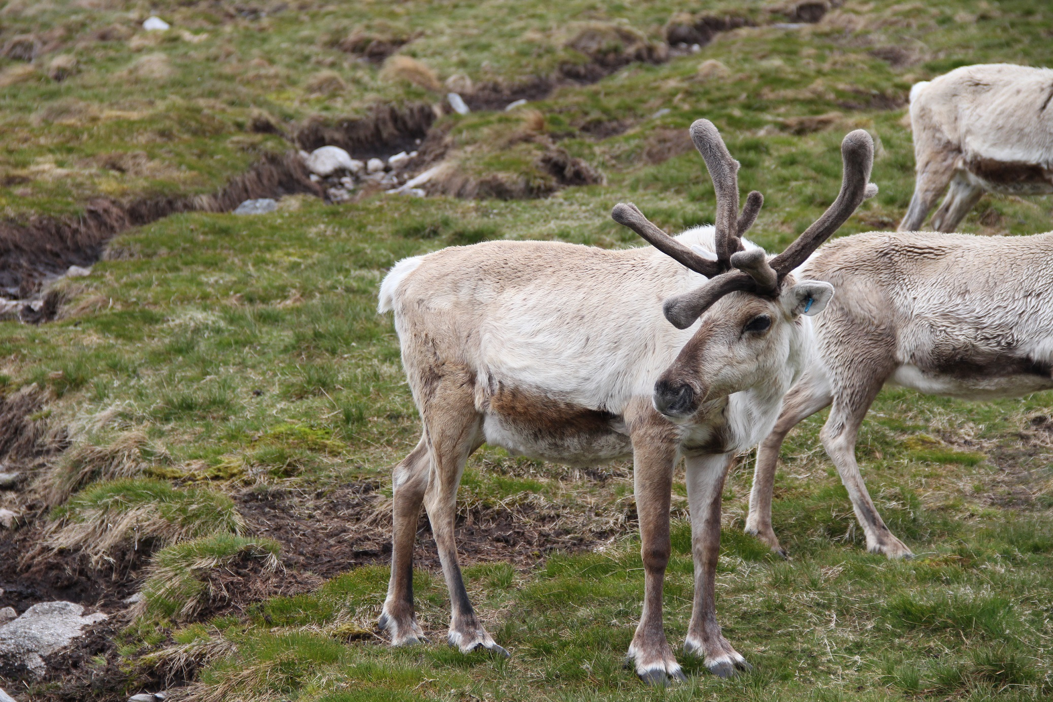 my morning at the cairngorm reindeer centre aviemore scotland