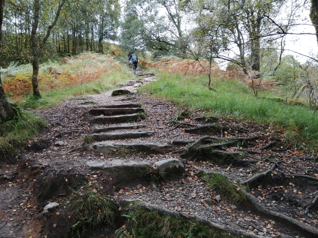 west highland way, scotland, forest, conic hill, trees, stone steps