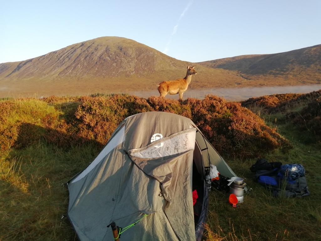 west highland way, scotland, glen coe, tent, camping, deer, wildlife, outdoor, mountains, hills