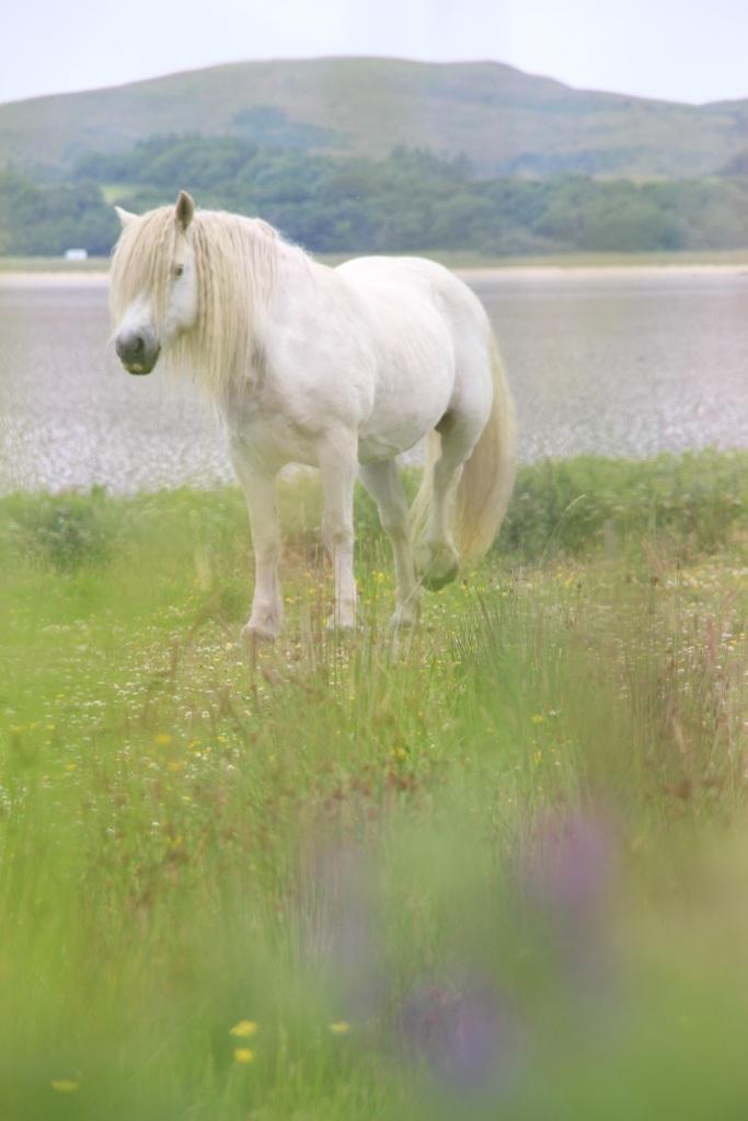 unicorn, white horse, islay, scotland